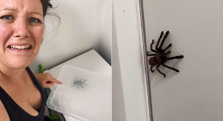 Tarântula botou medo em australiana, mas acabou capturada e admirada