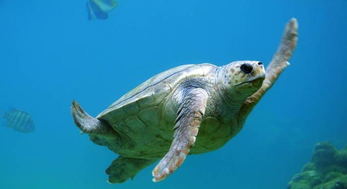 19 pessoas morrem após comer carne de tartaruga em Madagascar