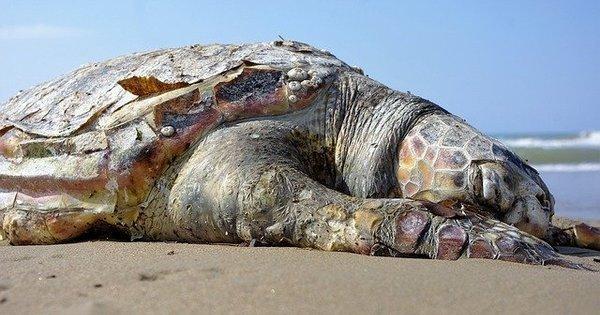 O que fazer quando encontrar um animal na areia da praia?