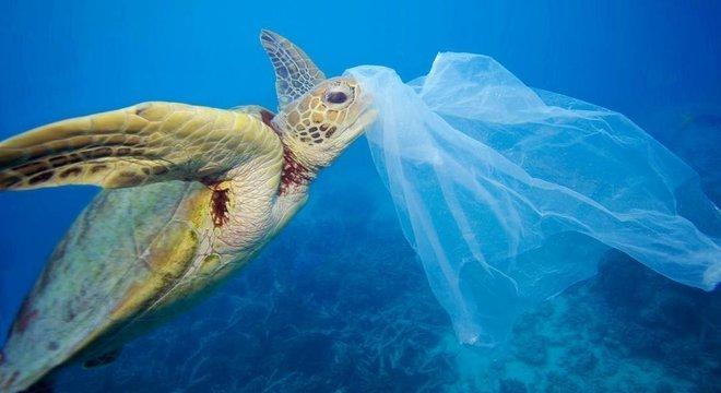 Tartarugas marinhas podem comer plástico por sentir cheiro de comida