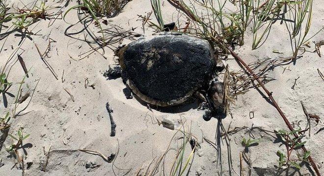 Tartaruga foi encontrada morta na Praia da Redinha, em 21 de setembro