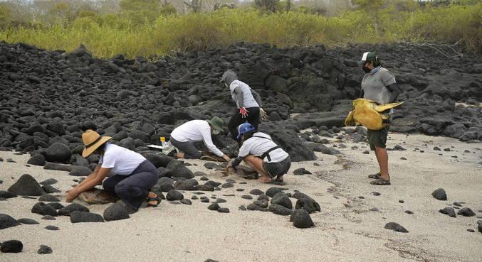 Mais de 18 mil tartarugas foram identificadas na ilha desde 2002