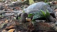 Tartaruga gigante decapita e come ave, em predação nunca vista antes