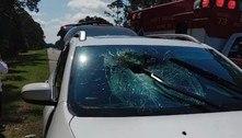 Tartaruga vara para-brisa e acerta motorista de 71 anos na cabeça
