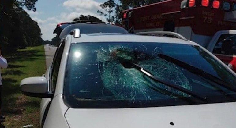 Uma tartaruga acertou a cabeça de uma motorista nos EUA, após varar o para-brisa do carro