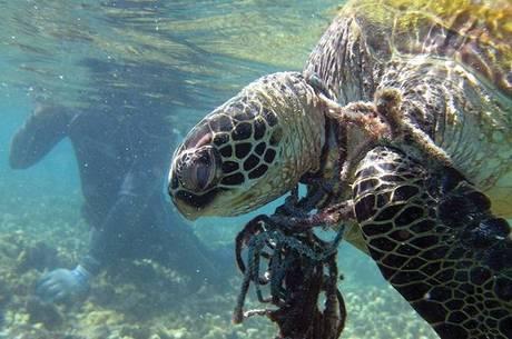Os canudos foram o sétimo item mais coletado nos oceanos
