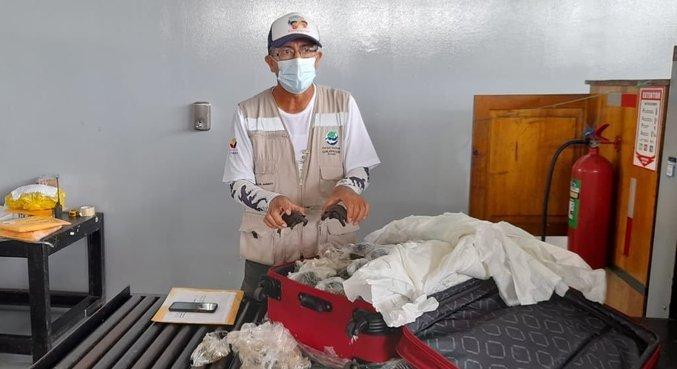 Mala com 185 tartarugas é encontrada em aeroporto em Galápagos