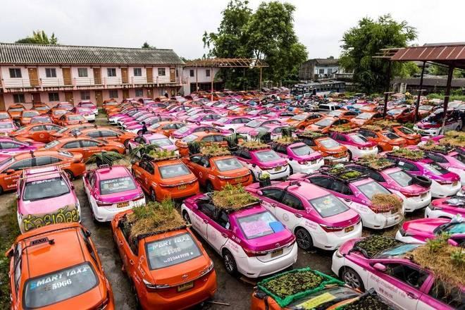 Tailândia usa teto de táxis abandonados para cultivar hortas