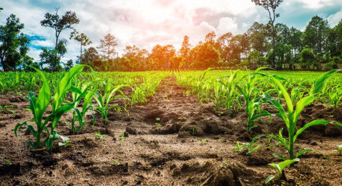 Plantas emitem sinais naturais relacionados a certas necessidades
