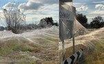 Paisagens da região do extremo leste do estado de Vitória, na Austrália, foram dominadas por densas camadas de teias de aranha, após a região ter sido atingida por fortes tempestades e uma série de enchentes