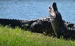 As autoridades de vida selvagem fazem as advertências de sempre para evitar conflitos