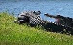 'Como um lembrete, o clima quente da primavera significa que os crocodilos estão mais ativos e mais visíveis', afirmou a Comissão de Conservação de Peixes e Vida Selvagem da Flórida, em um artigo sobre o assunto