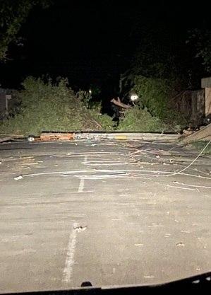 Foram 280 quedas de árvores sobre fiação elétrica após chuvas