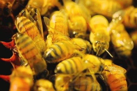 Documentário enaltece complexidade das abelha e mostra como os insetos salvaram a América