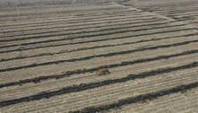 Tigre siberiano ataca agricultor e um carro no nordeste da China