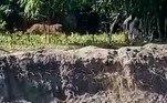 No entanto, o animal ainda não foi localizadoBombou no HORA 7!Chinês pego com amante na cama é amarrado em gaiola e jogado em rio