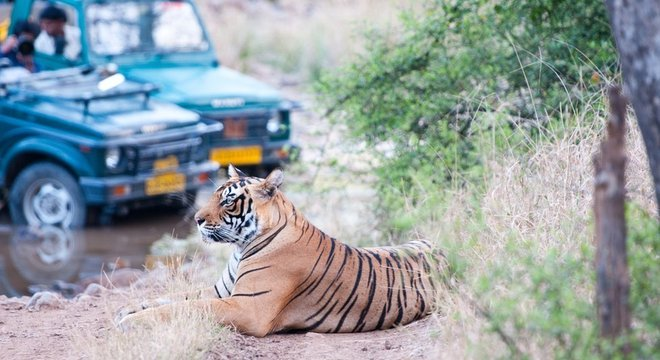 Em 2014, censo mostrou uma população de 2.226 tigres na Índia