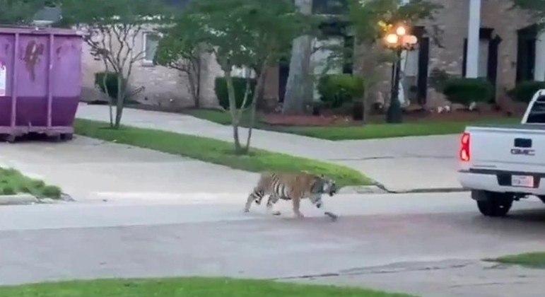 Animal com atitude agressiva foi visto em Houston, no Texas