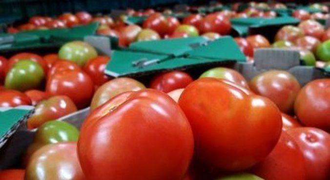 O tomate está entre os produtos que impulsionaram o custo da cesta básica