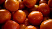 Preços do tomate, cenoura e alface sobem em julho, indica Conab