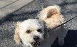 — Ele morde?— CorreLeia mais!Cãozinho é salvo por dona antes de ser sufocado por píton: 'Só pânico'