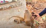 Na Indonésia, uma pessoa foi presa e três macacos presos em uma gaiola foram confiscados no dia 3, em uma operação contra esse tipo de prática