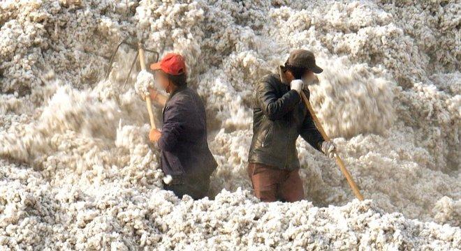Mais de 1 milhão de pessoas trabalham na colheita de algodão em Xinjiang sob condições questionáveis