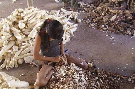 2,5 milhões de crianças trabalham ilegalmente no Brasil