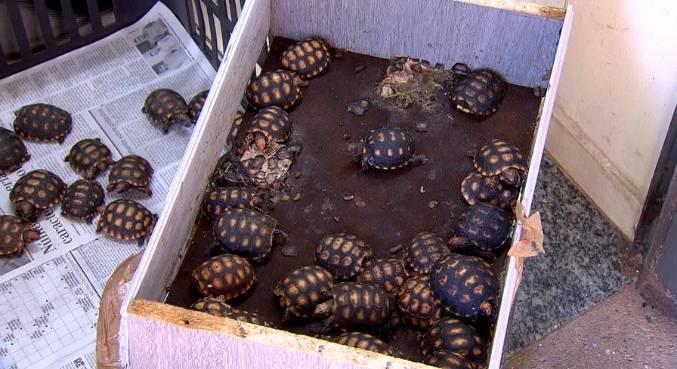 Repórter Record Investigação mostra o tráfico de animais