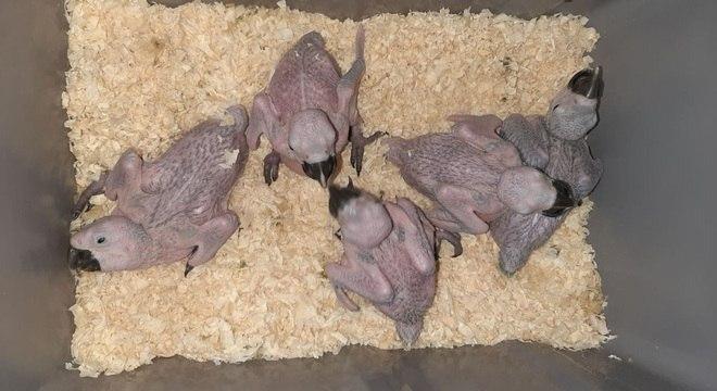 Homem também tinha aves capturadas para a venda posterior