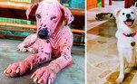 Este cãozinho passou por uma transformação inacreditável depois de receber cuidado e amor