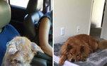 Este cãozinho estava sofreno com uma sarna severa, mas depois de ser resgatado e ter ganhado um novo lar, sua aparência mudou completamente, não restando nenhum sinal do seu passado de sofrimento