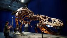 Tiranossauro rex não era veloz como se imaginava, revela estudo