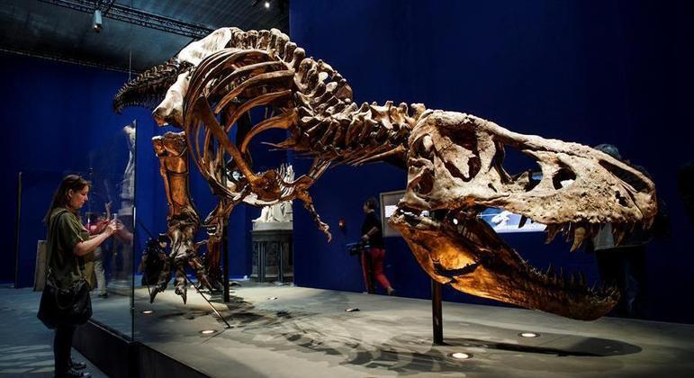 Pesquisadores estudaram um T.rex de 12 metros de comprimento