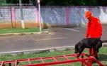 No Rio deJaneiro, bombeiros são acionados de 3 a 5 vezes por mês para procurardesaparecidos ou acidentados. No quartel de Magé, 16 cães são treinados para ajudar nas buscas. Nesse caso, o animal cheira a roupa da pessoa desaparecida e vai procurarpela mata