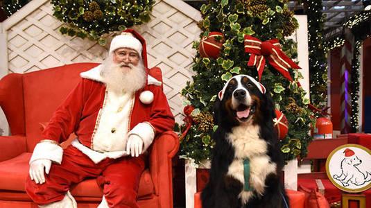 Trono pet: cães podem tirar fotos com Papai Noel no shopping