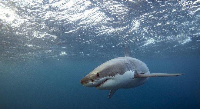 Ataques de tubarão vêm aumentando na Austrália