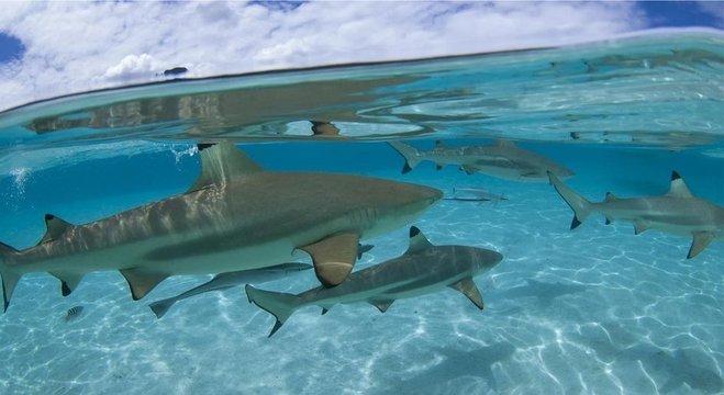 Enquanto mortes por ataques de tubarão na Austrália permanecem constantes, número de mordidas dobrou