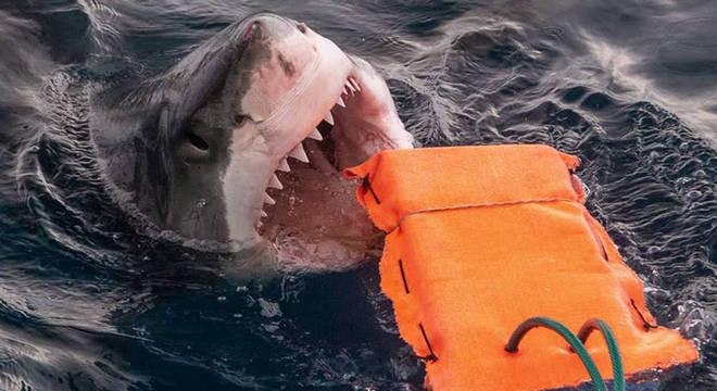 Tecido super resistente pode salvar a vida de mergulhadores em um ataque de tubarão