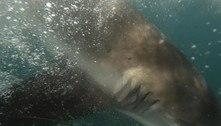 Tubarão quase arranca a mão de jovem e o arrasta por 20 metros