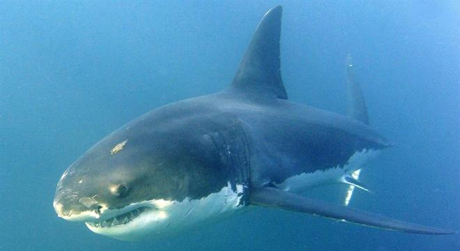Família acredita que ataque tenha sido de  um tubarão branco, comum na região