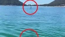 Tubarão persegue esportista, mas desiste após alerta de pescador