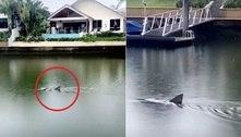 Tubarão é flagrado em canal que atravessa área residencial de luxo