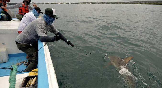 Ilha é lar de mais de 2,9 mil espécies de animais marinhos