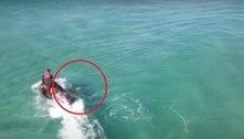 Tubarão furioso dá cabeçada em jet ski e quase derruba mergulhador