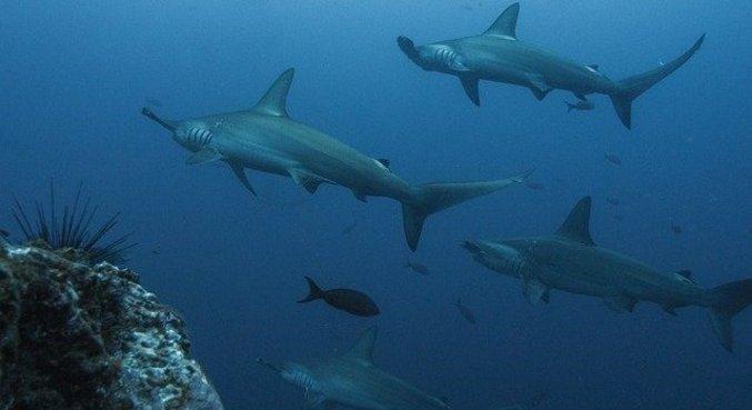 Algumas espécies chegaram a diminuir até 98% no período estudado