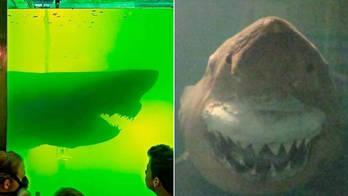 Tubarão morto esquecido em parque abandonado terá novo lar (Reprodução/Tatarstan24)