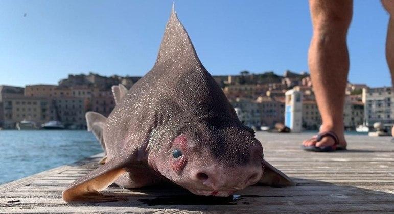 Bicho foi encontrado boiando no mar, aparentemente morto, e levado para o cais