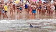 Tubarão espalha pânico em praia ao nadar em águas muito rasas