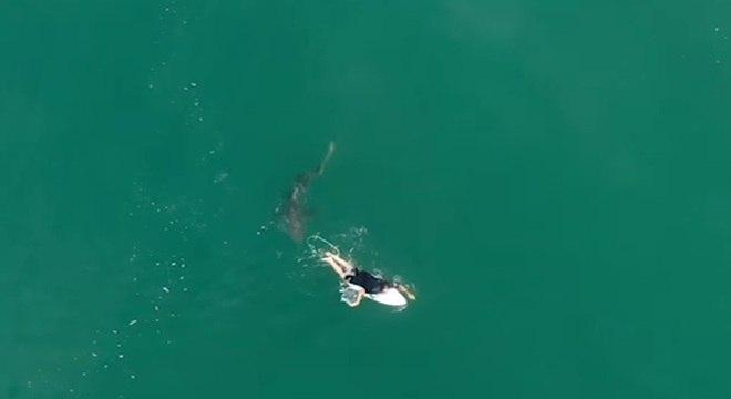 Tubarão passou rapidamente por baixo da prancha do surfista